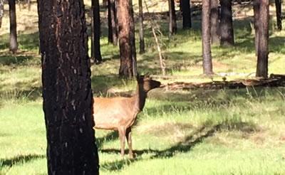 Greer-Elk