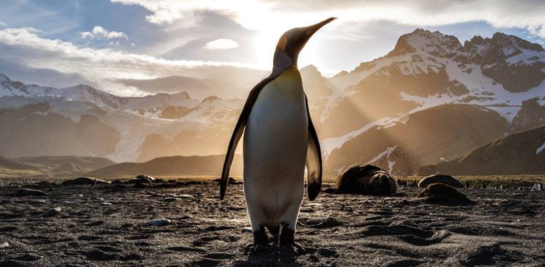 Penguin standing in rays of sun