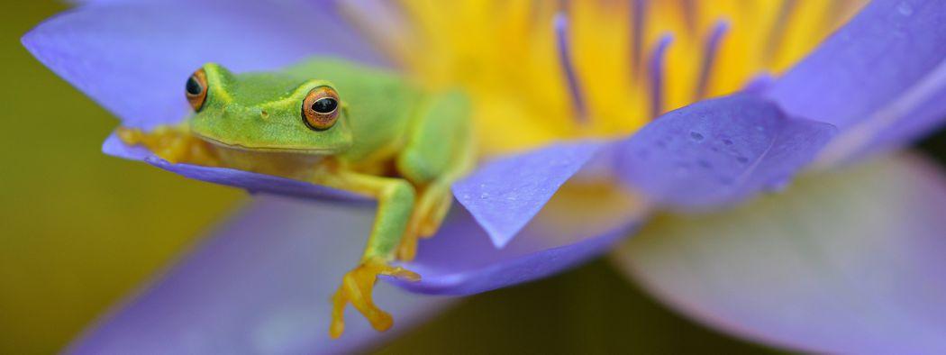 rainforest frog on flower