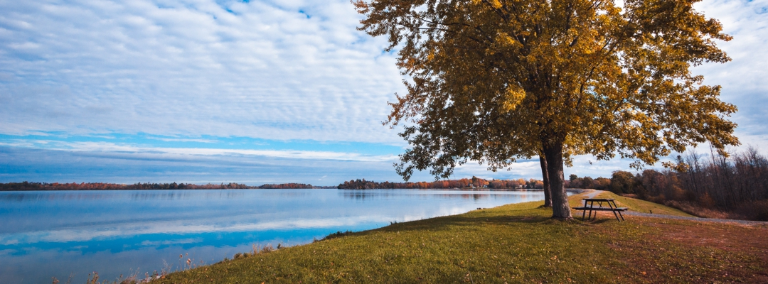 trees at the edge of a lake
