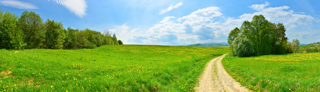 beautiful path through meadow with mountains in background
