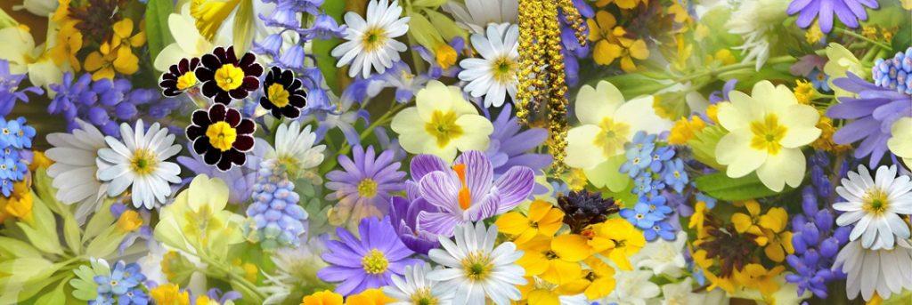 flowers growing in a garden