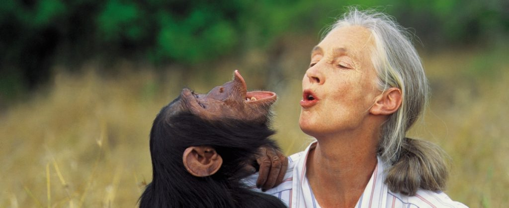 Jane Goodall with chimpanzee - photo by Michael Neugebauer