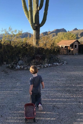 small child pulling red wagon with saguaro and mountain in background