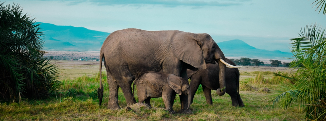 family of elephants with mountains in background