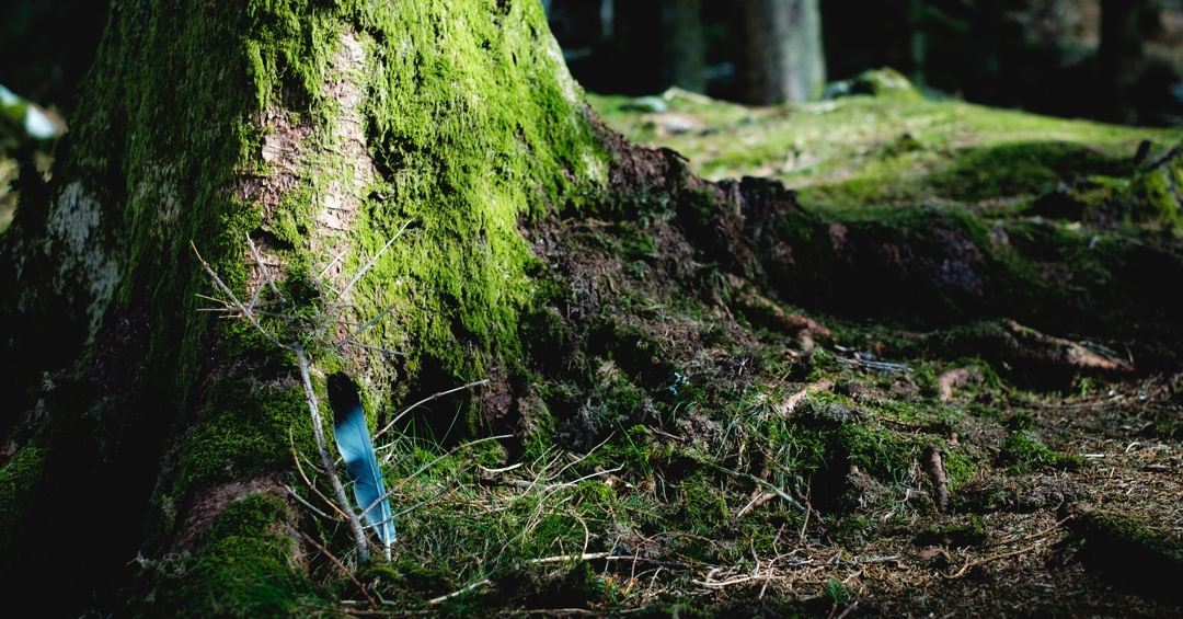 Mossy tree trunk with blue feather stuck in ground