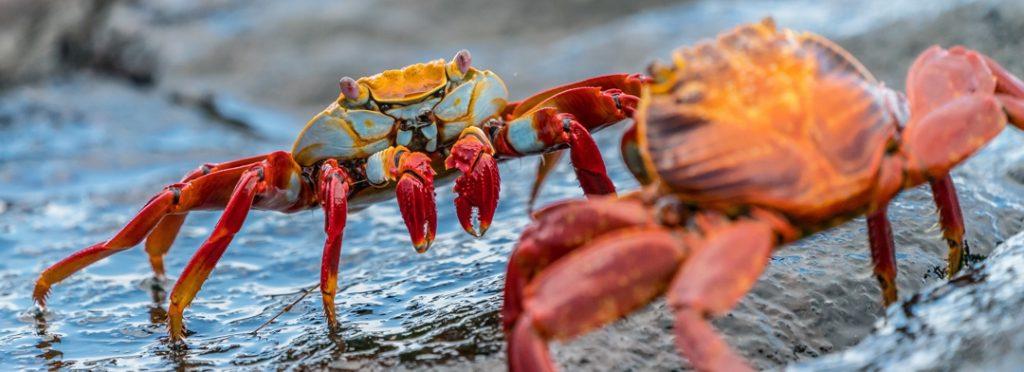 crabs on wet rocks