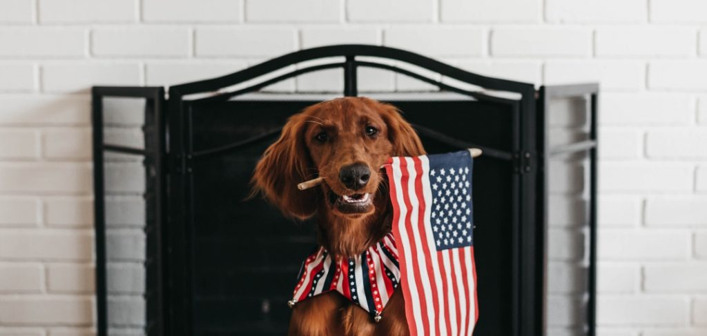 dog holding flag in its teeth sitting in front of fireplace