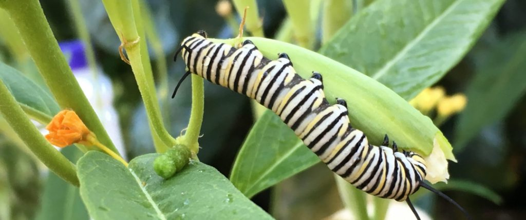 caterpillar on leaf
