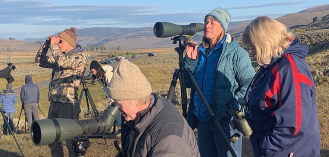 Wolf Watchers at Lamar Valley, Yellowstone National Park