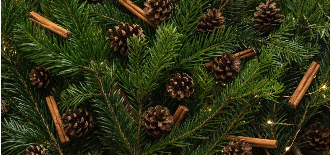 pine sprigs, pine cones, cinnamon sticks