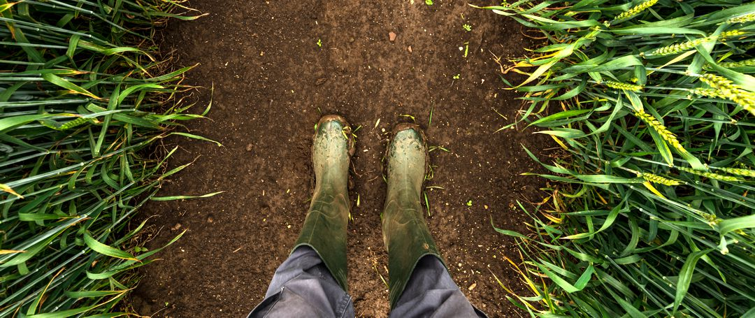 Farmer in rubber boots walking through muddy wheat field, top view