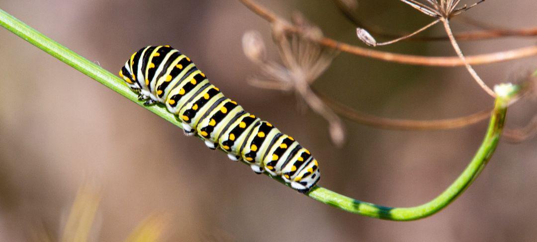caterpillar on plant stem