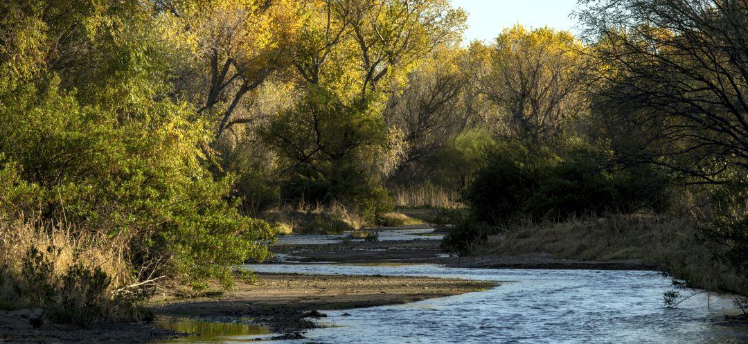 Fall colors on the Santa Cruz River near Tumacacori in November 2018. ©Bill Hatcher 2018